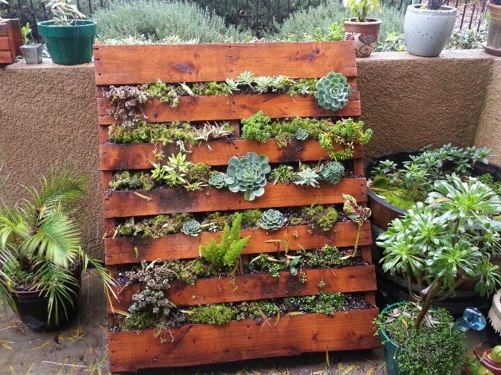 create a rustic, shabby-sheik theme within your garden by using an old pallet to store small plants
